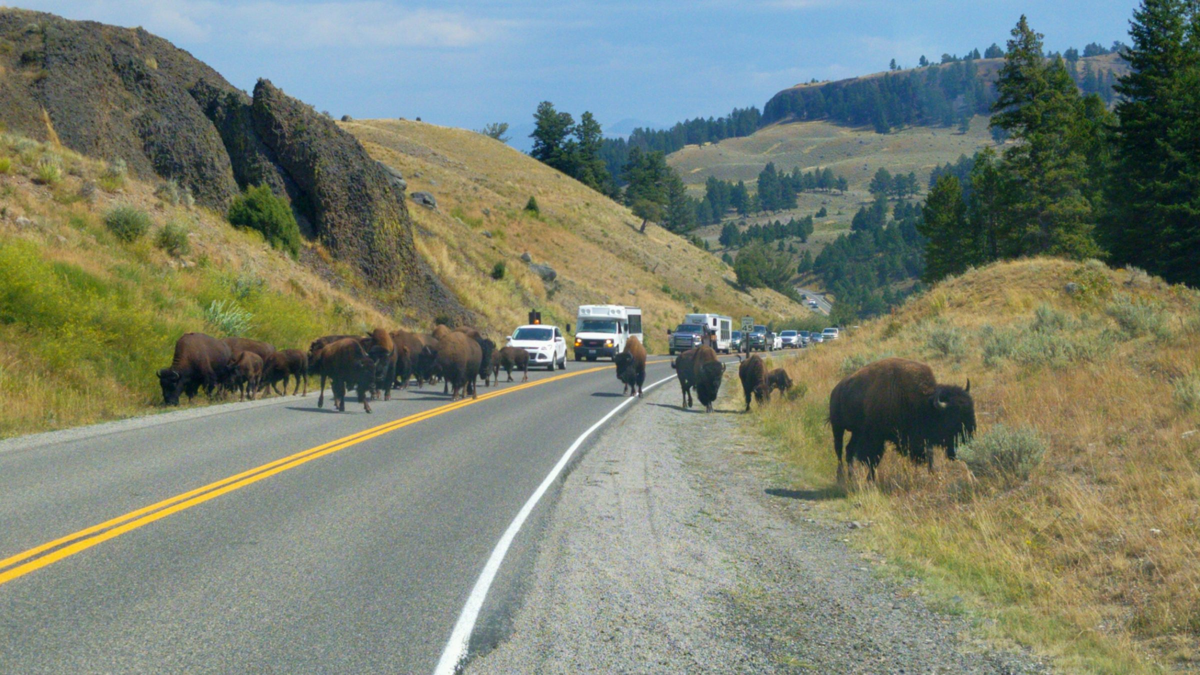 Bison Top 10 Things to Do in Yellowstone