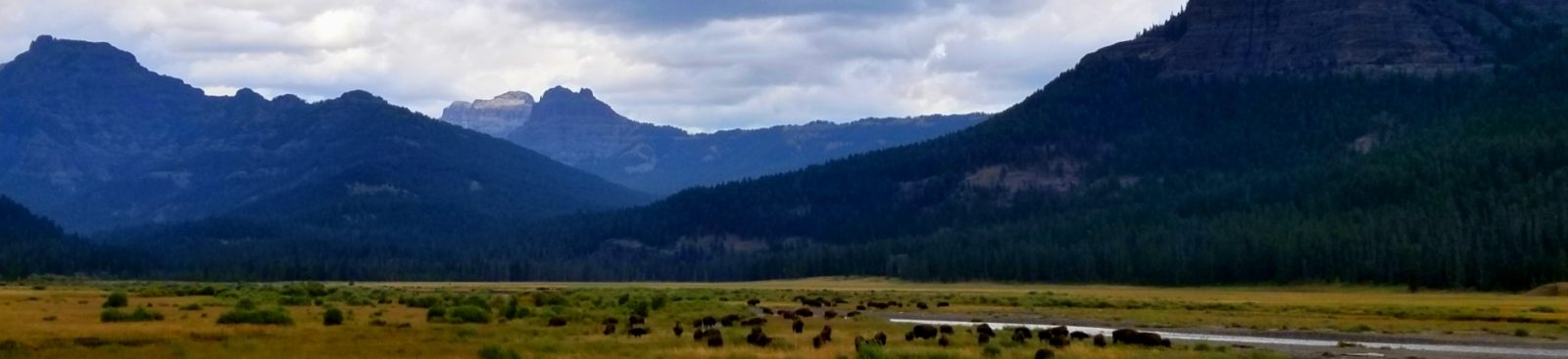 Lamar Valley Top 10 Things to Do in Yellowstone