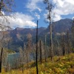 New undergrowth after wildfire around St. Mary Lake in Glacier National Park