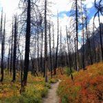 Fall-colored foliage hiking around St. Mary Lake