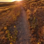 Hiking path at sunset on Antelope Island