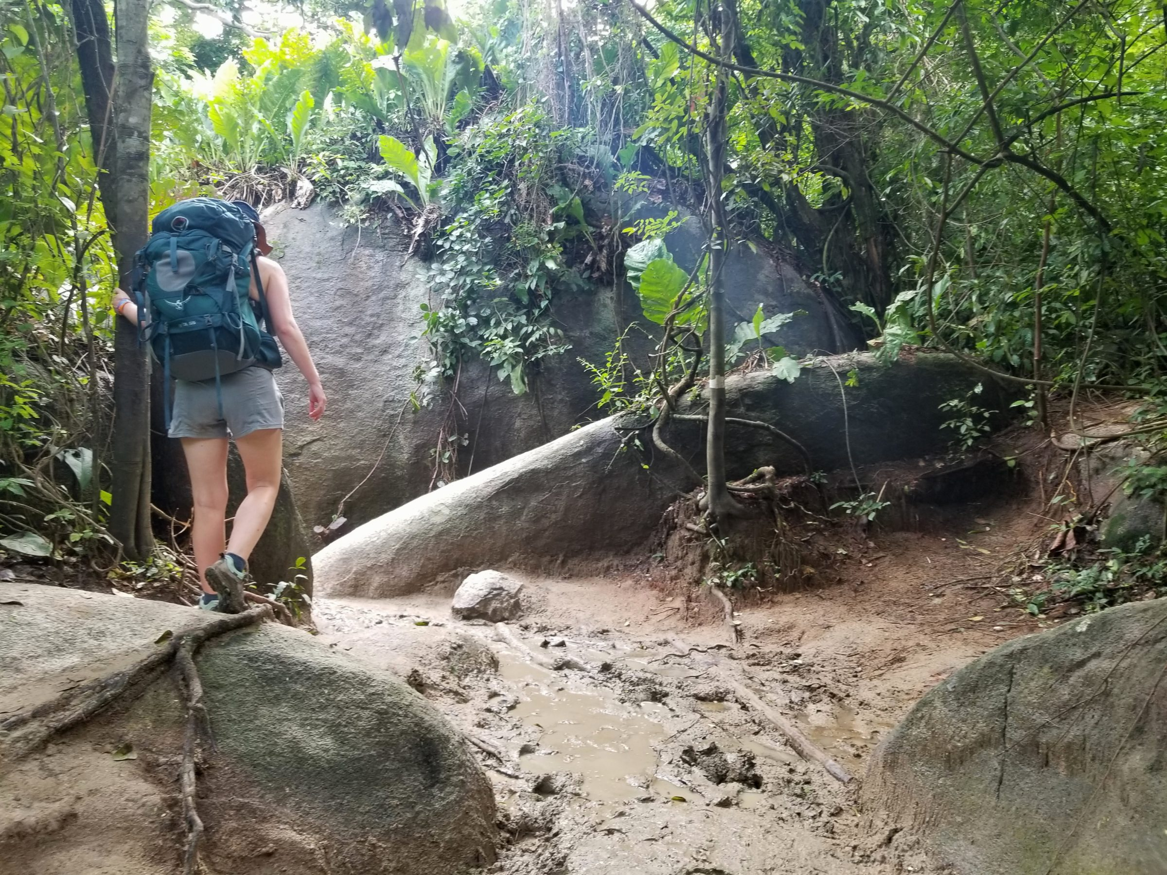 Lower your expectations for hiking in Tayrona National Park, it is extremely muddy.