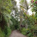 Beautiful walk to the coffee region from Salento