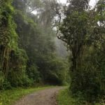 Forest hike at Valle de Cocora