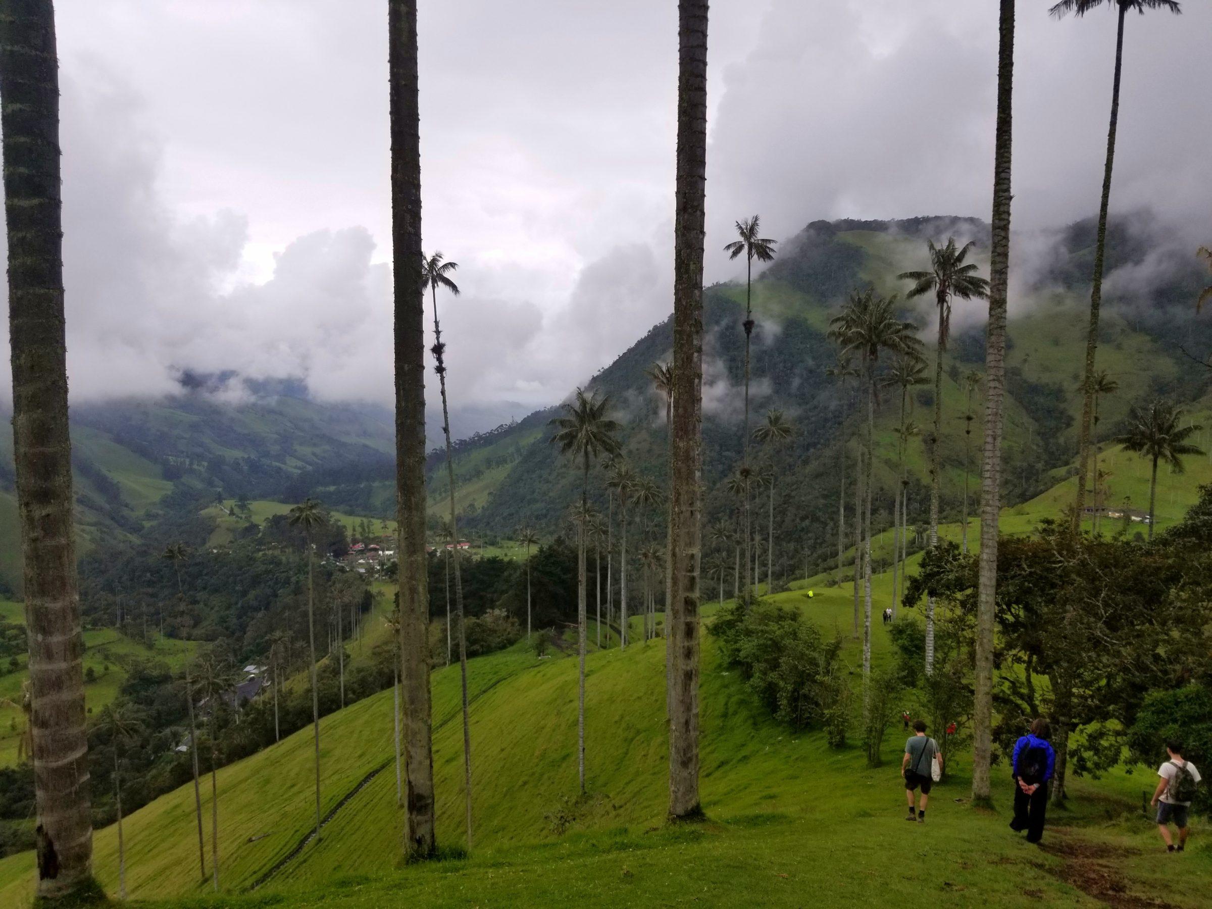 Hiking down through Valle de Cocora