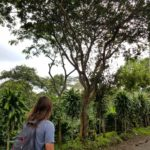 Strolling through Colombia's coffee region