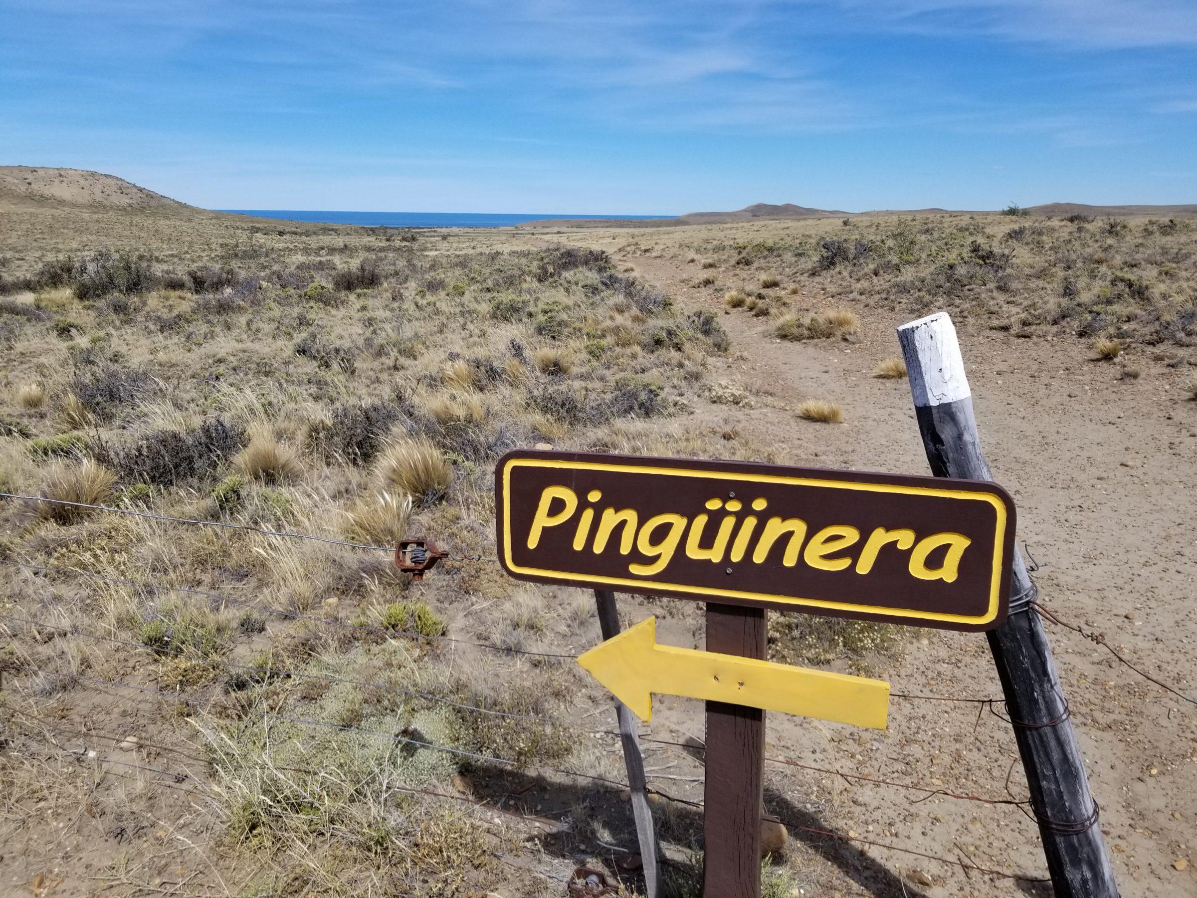 Monte Leon National Park penguin trail