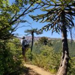Hiking through aracauria forest